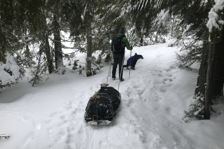 Hiker pulling pulk through snow to winter campsite