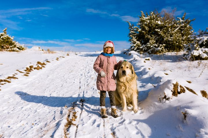 Can You Snowshoe With Your Dog